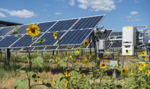 Flowers in front of a solar panel (Photo by Dennis Schroeder / NREL)
